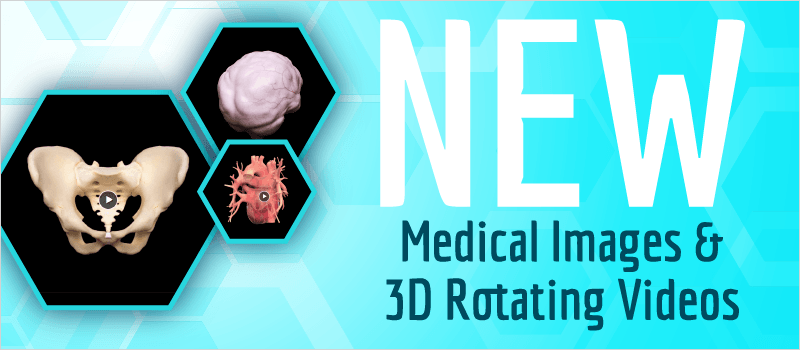 New Medical Images and 3D Rotating Videos | eLearning Brothers thumbnail